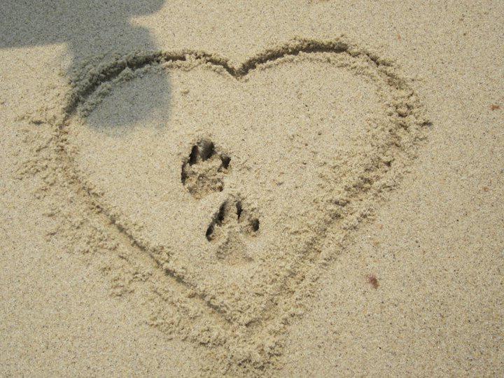 honeymoon wishes honeymoon registry where your wedding